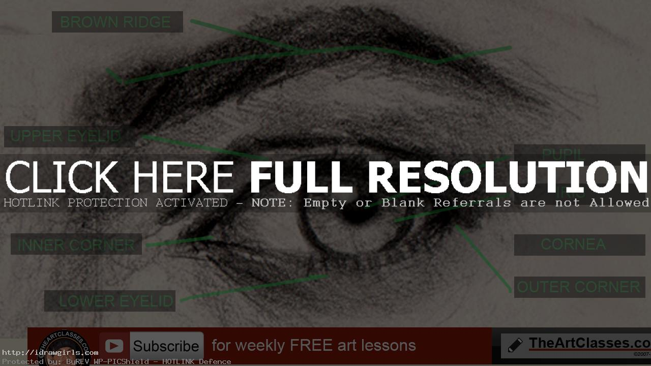 How to draw eyes structure and anatomy