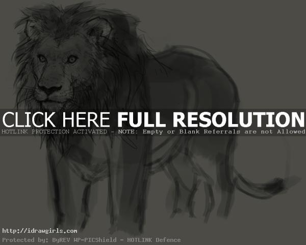 drawing lion How to draw lion