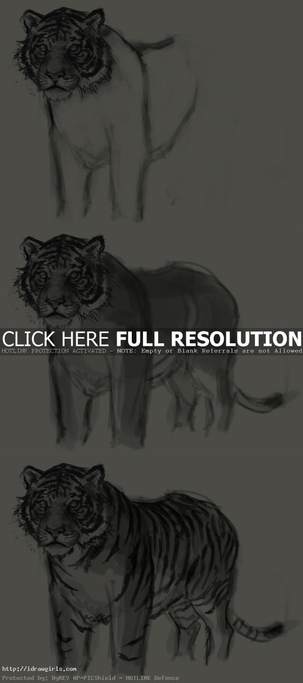 how to draw tiger How to draw tiger
