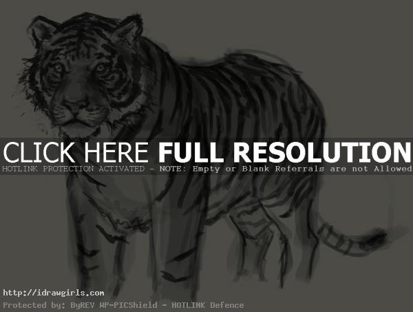 tiger drawing How to draw tiger