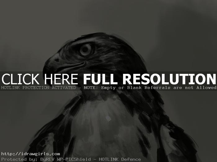 hawk drawing