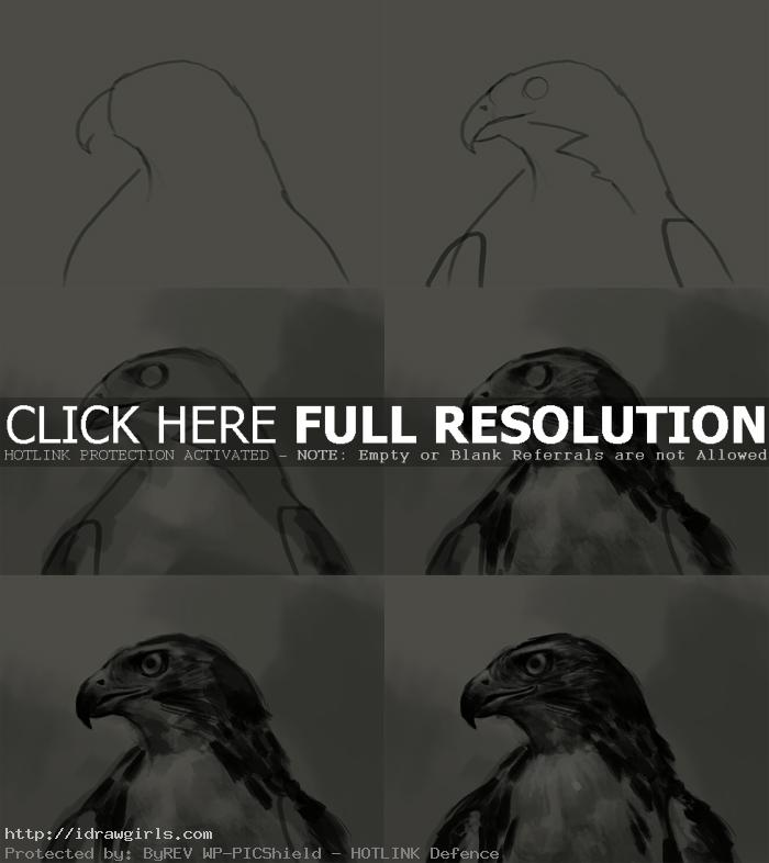 drawing a hawk step by step