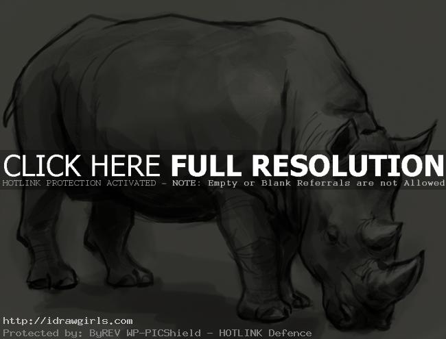 rhino drawing How to draw rhino