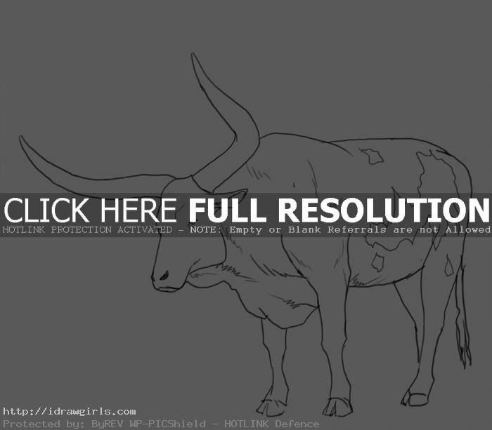 big horns ox How to draw big horns ox