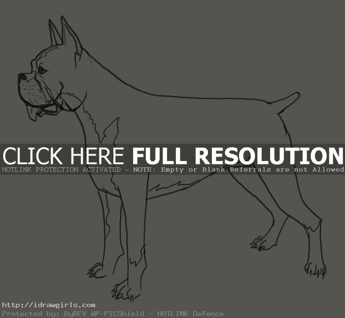 How to draw Boxer