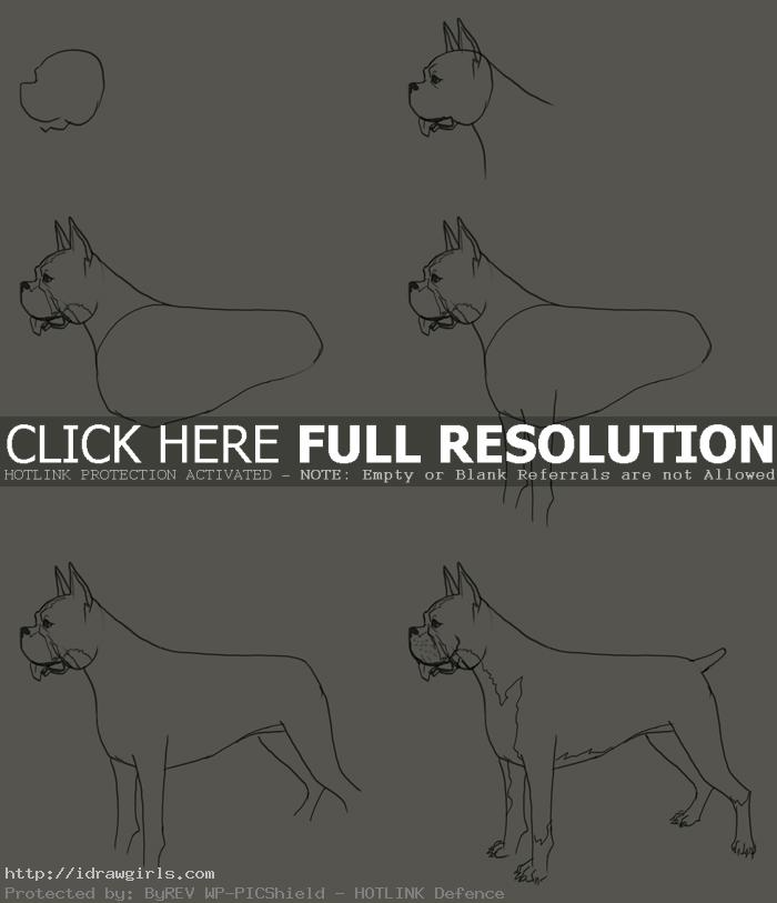 how to draw a Boxer dog