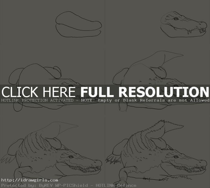 how to draw crocodile How to draw crocodile