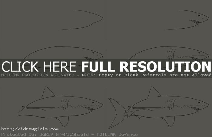 how to draw shark How to draw shark