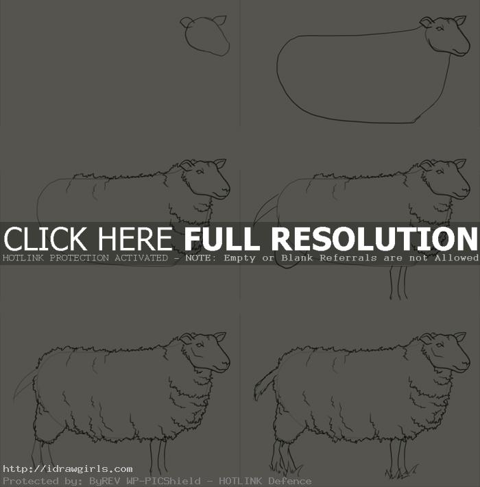 how to draw sheep How to draw sheep