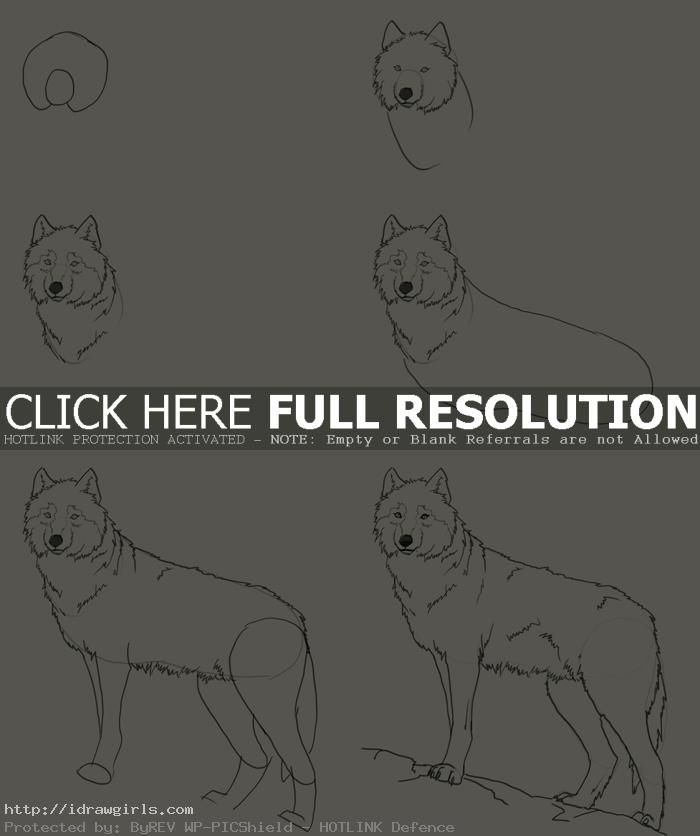 how to draw wolf How to draw wolf