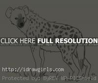 hyena drawing