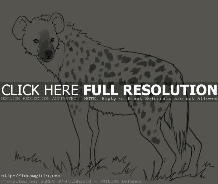hyena drawing How to draw hyena