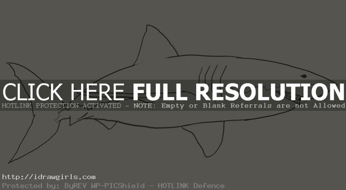 shark drawing How to draw shark