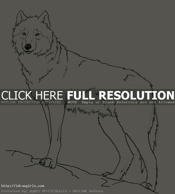 wolf drawing How to draw wolf