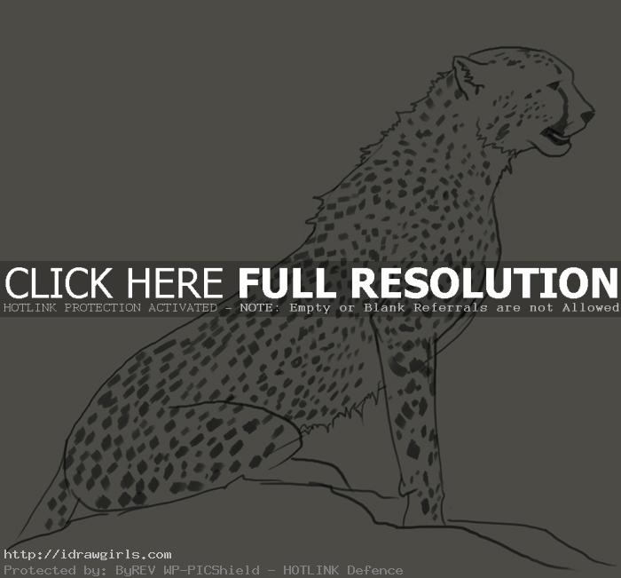 cheetah drawing