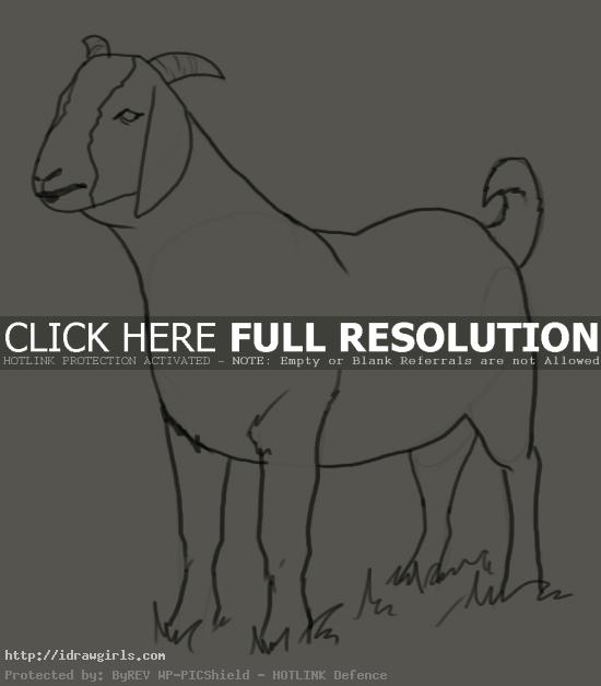 goat drawing How to draw goat