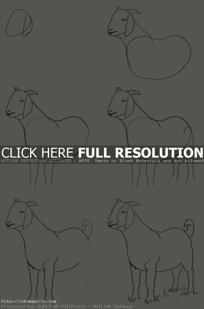 how to draw goat How to draw goat