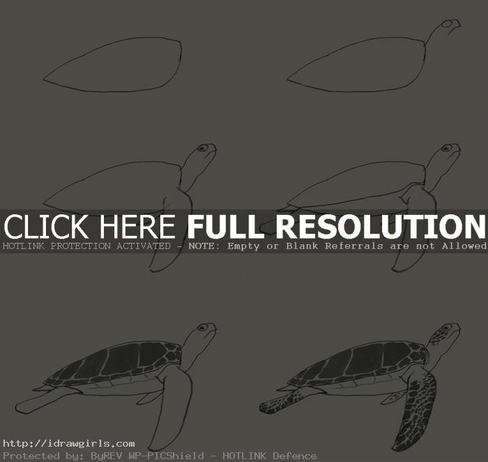 how to draw green turtle How to draw green sea turtle