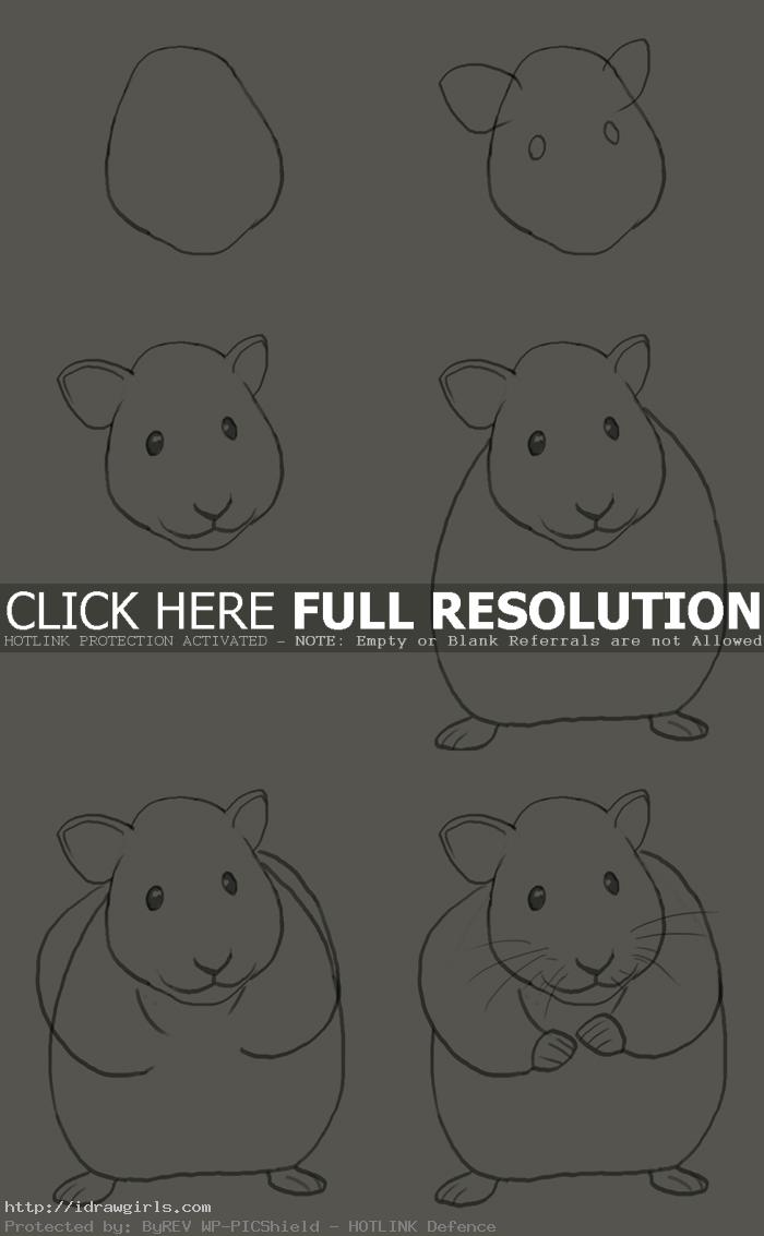 how to draw hamster How to draw hamster