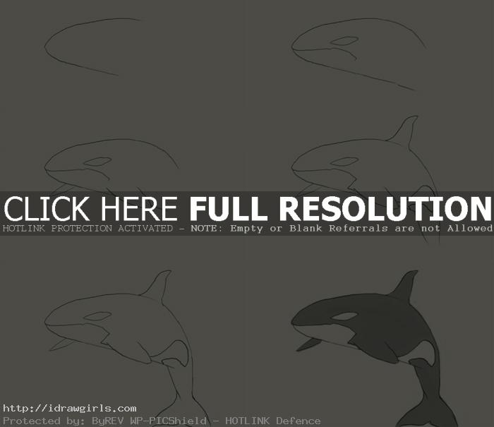 how to draw orca killer whale How to draw killer whale