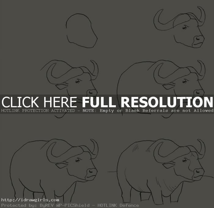 how to draw water buffalo How to draw water buffalo
