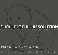 polar bear cub drawing