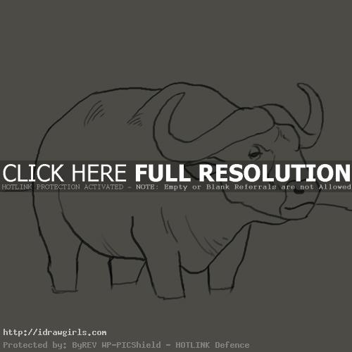 water buffalo drawing
