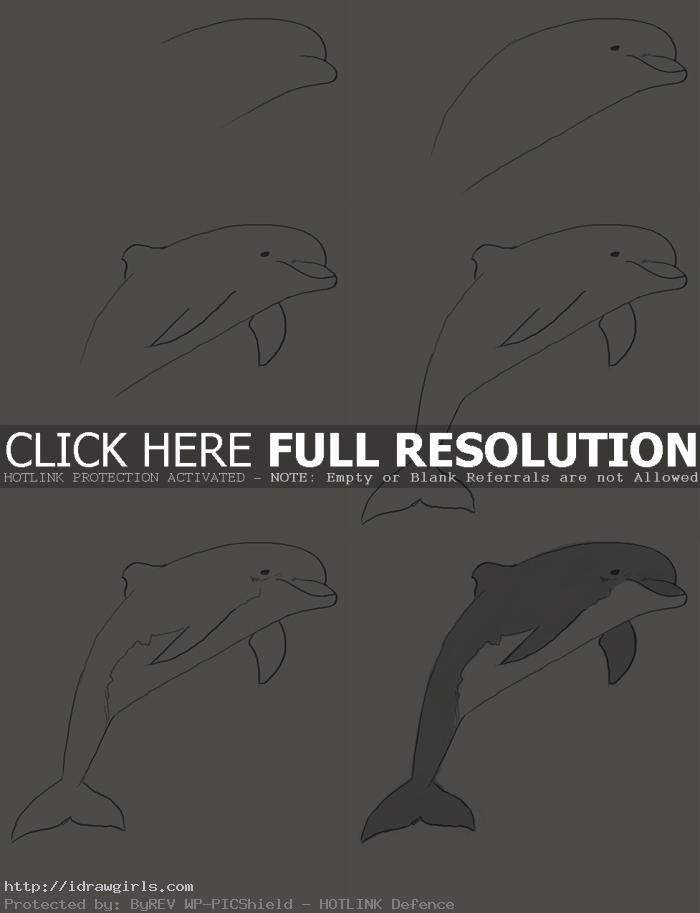 how to draw dolphin How to draw dolphin
