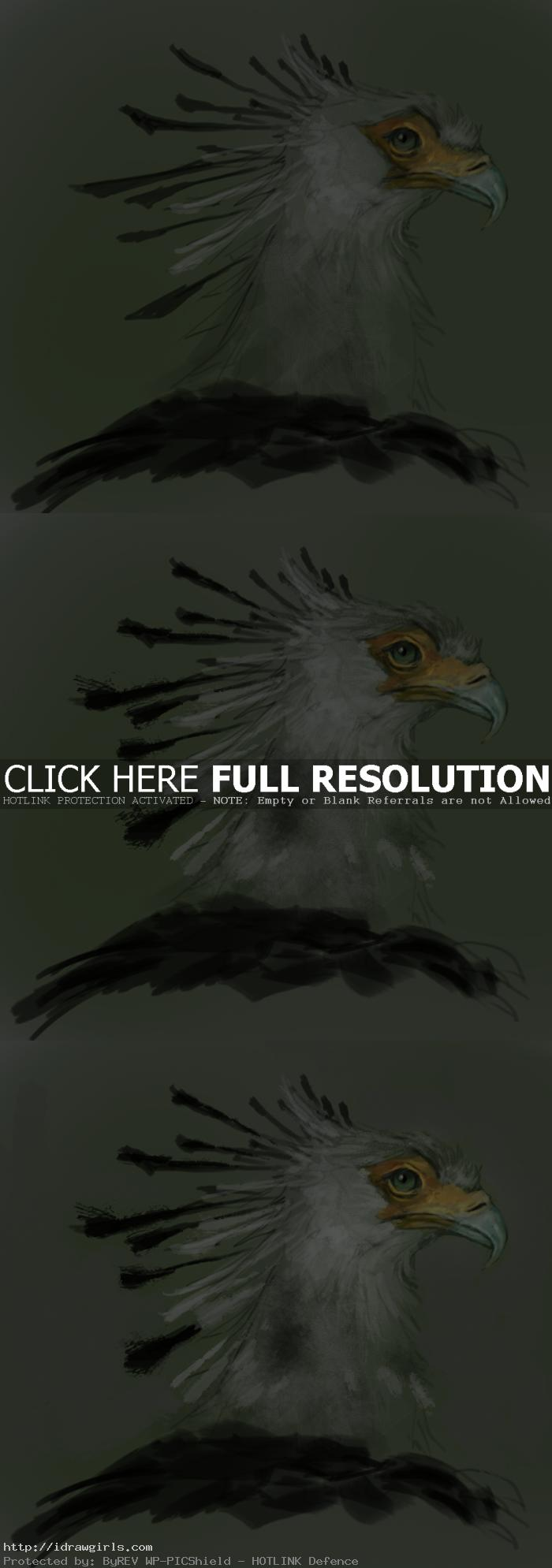 digital tutorial secretary bird painting