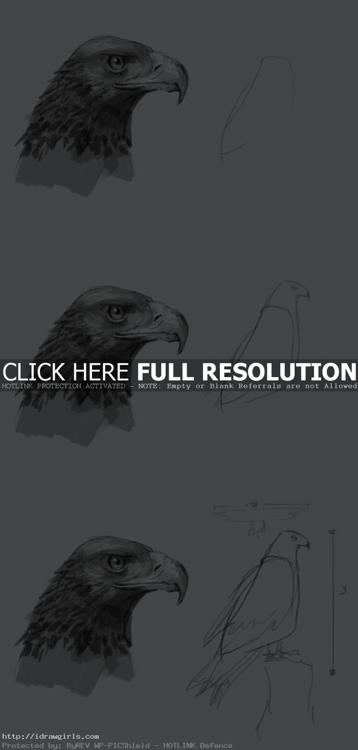 drawing eagle body