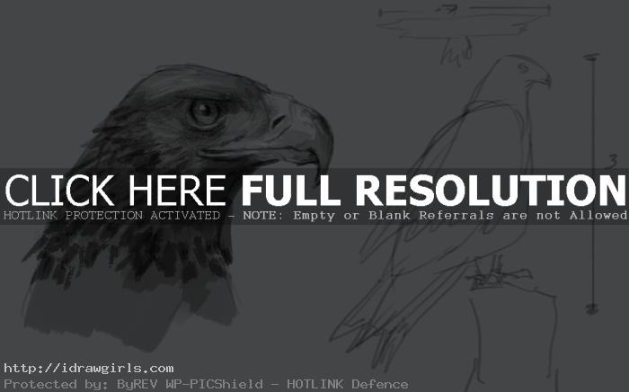golden eagle drawing How to draw golden eagle
