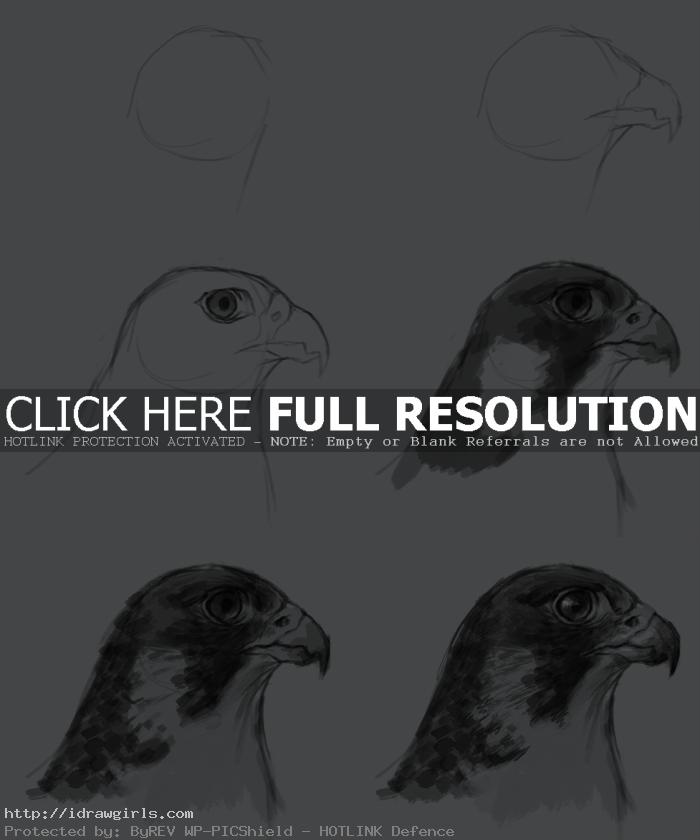 how to draw falcon How to draw falcon