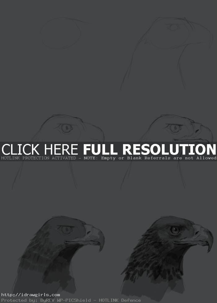 how to draw golden eagle How to draw golden eagle