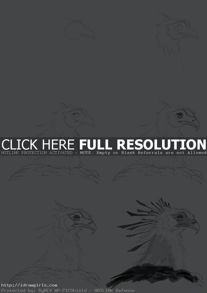 how to draw secretary bird