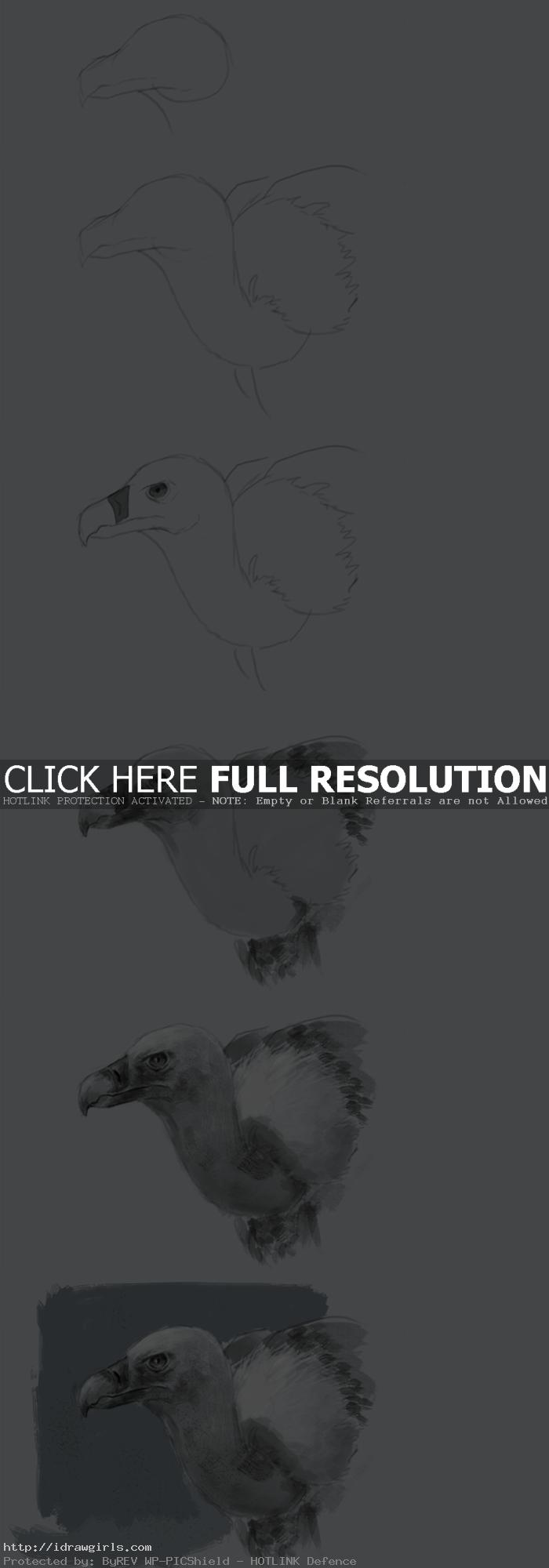 how to draw vulture How to draw a vulture