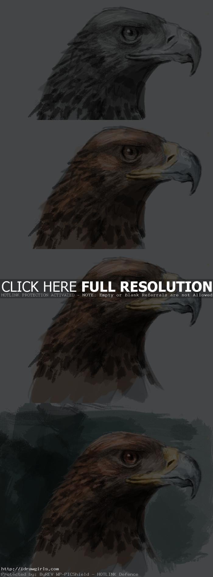 painting eagle tutorial Painting golden eagle tutorial