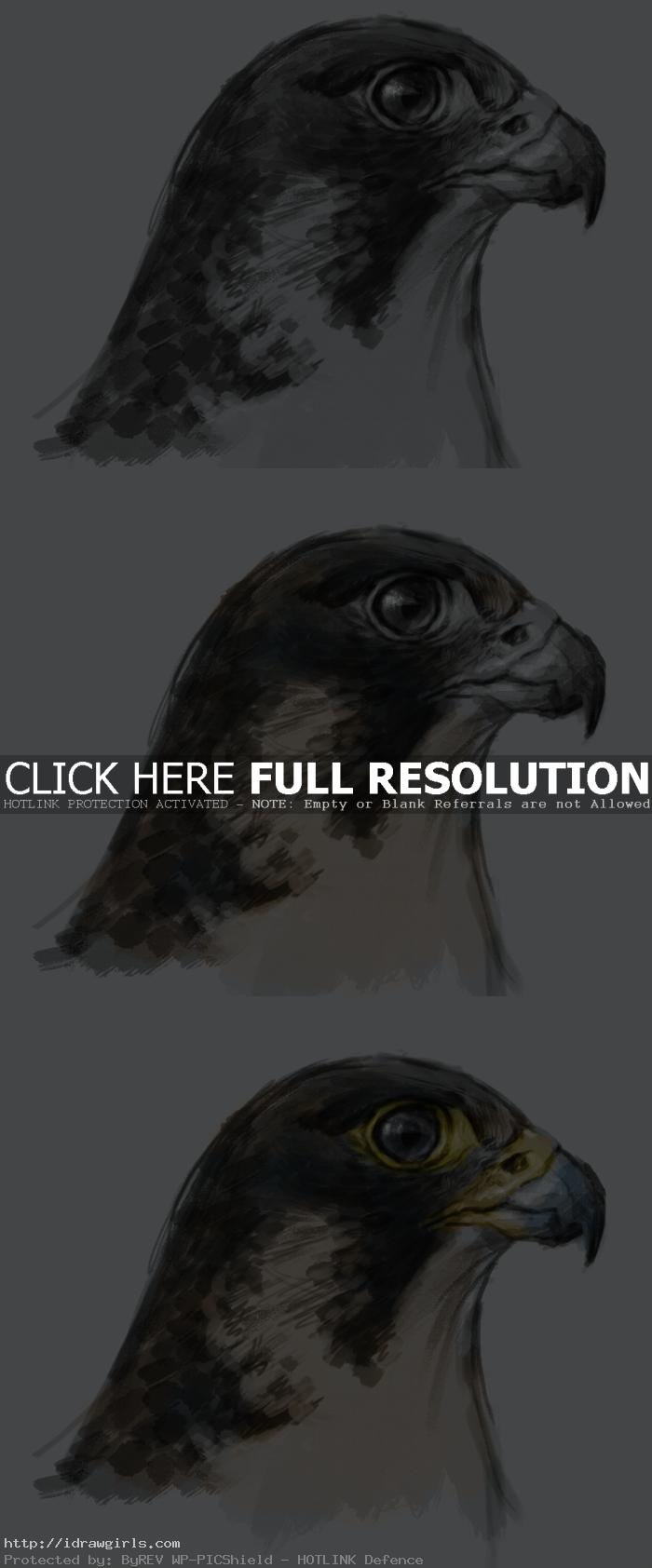 painting tutorial falcon