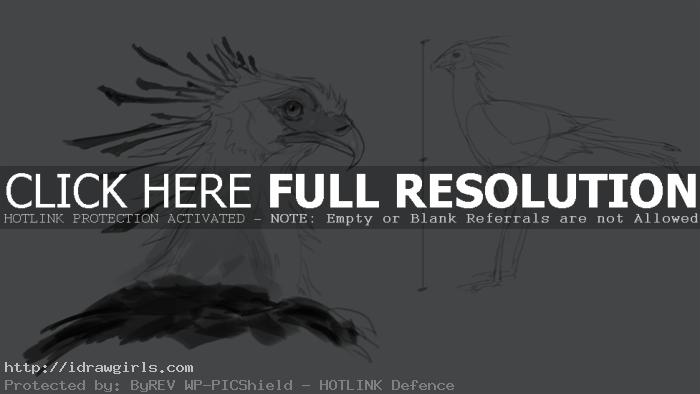 secretary bird body ratio How to draw secretary bird