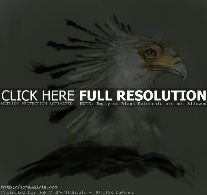 secretary bird painting Painting secretary bird tutorial