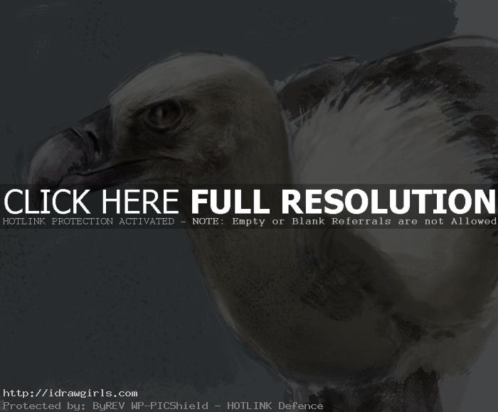 vulture digital painting