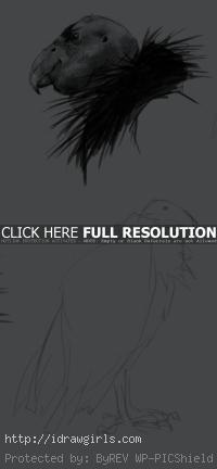 condor drawing