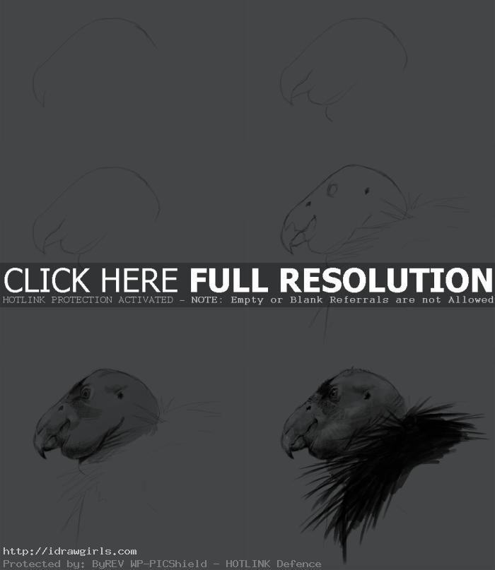 how to draw condor