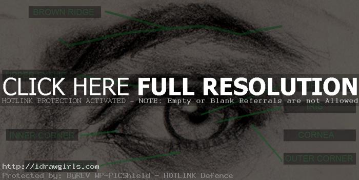 Drawing eyes structure and anatomy