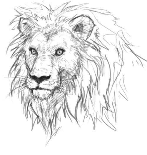 how to draw lion sketch How to draw lion