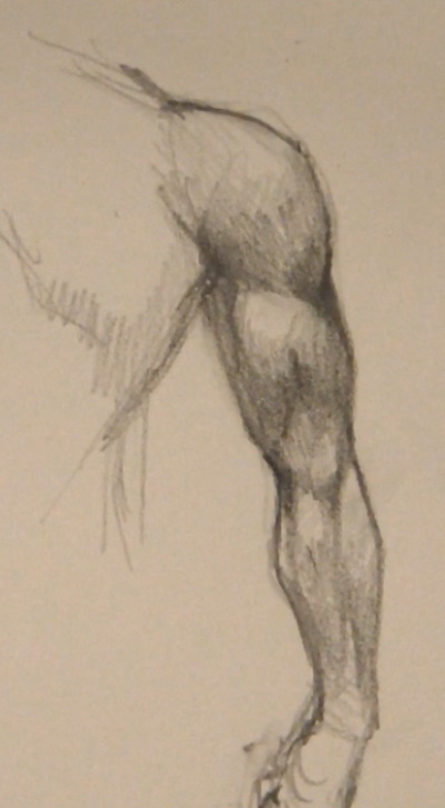 draw arm muscles back view