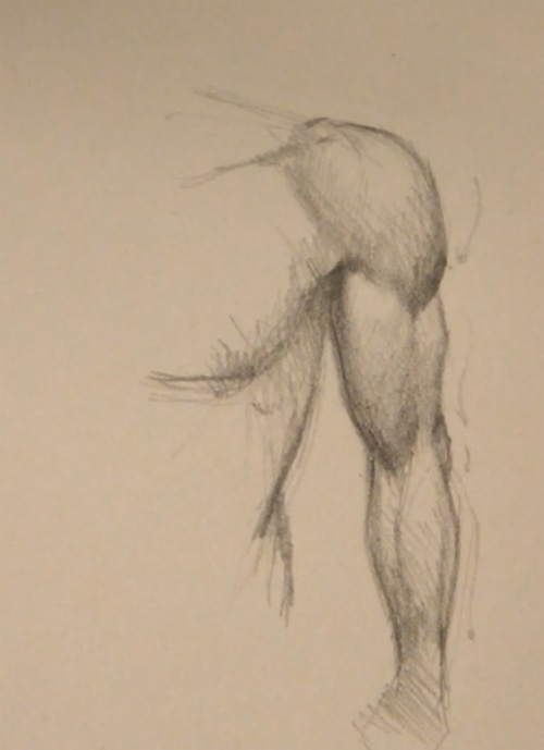 drawing arm muscle front view