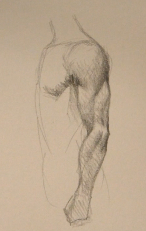 arm muscle side view Draw arm muscles side view