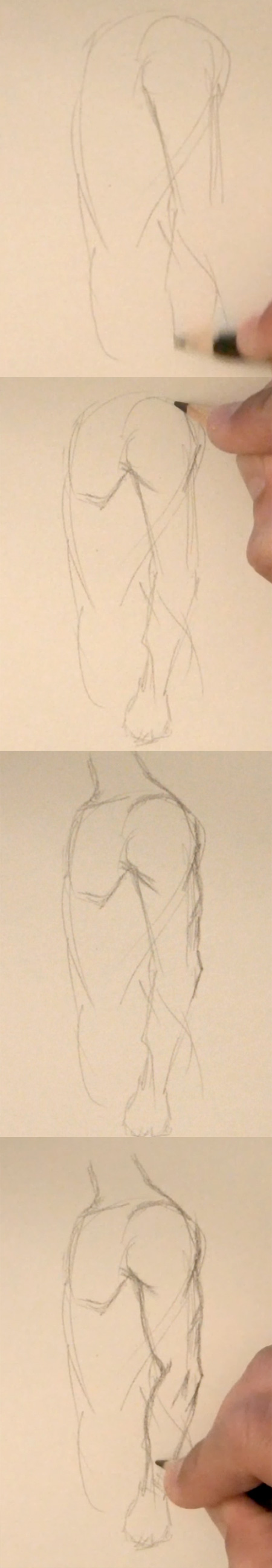 draw arm muscles side view step 1