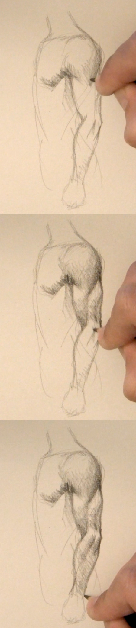 draw arm muscles side view step 2