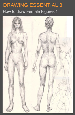 cover de fem fig 01 Drawing male and female body tips and technique